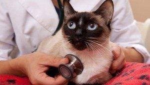 Kedilerin Bakımı Nasıl Yapılmalıdır