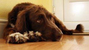 Köpeklerde Gaz ve Şişkinlik Nedenleri