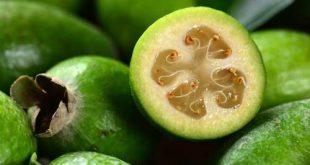 Kaymak Meyvesi